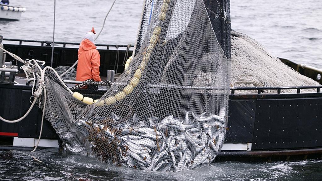 La pesca illegale destabilizza la Somalia - Nigrizia